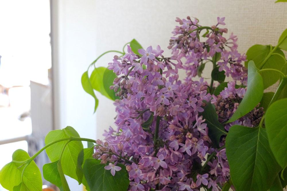 お花と上手にお付き合いする秘訣は、こまめなお手入れ
