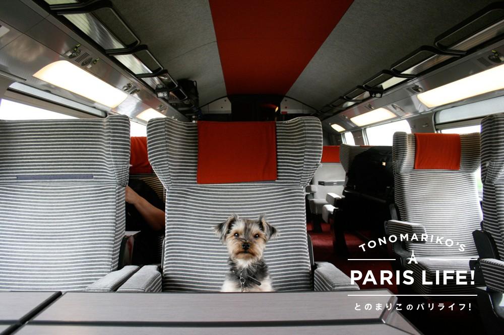 犬も立派なお客様!優雅で快適なフランス鉄道の旅