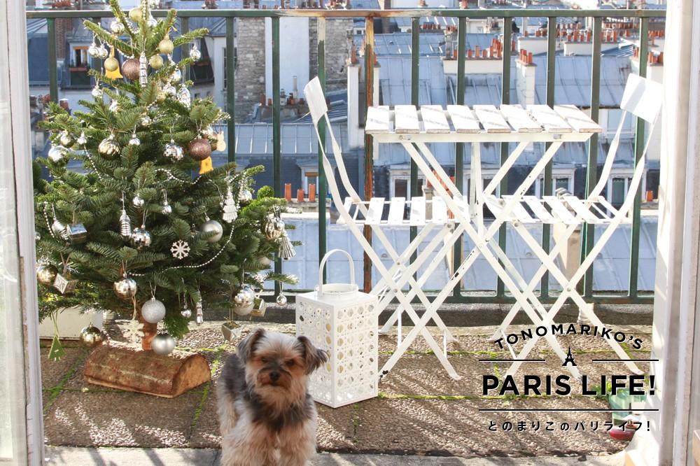 年に1度の一大イベント!フランスのクリスマスはもみの木選びからはじまる