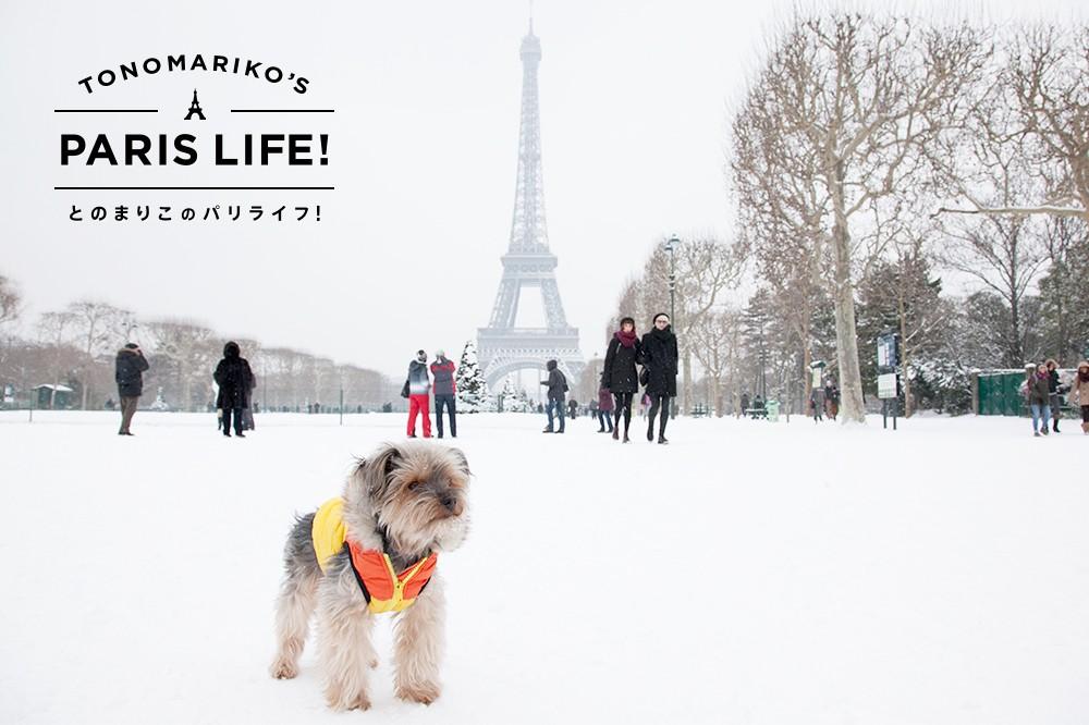 雪が好きなパリジェンヌはがっかり!?今年のパリはあたたかい