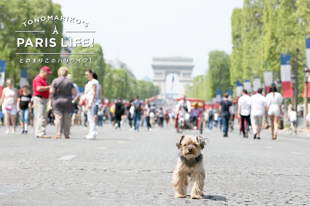 月に1度の歩行者天国!シャンゼリゼ大通りの真ん中を散歩できる日