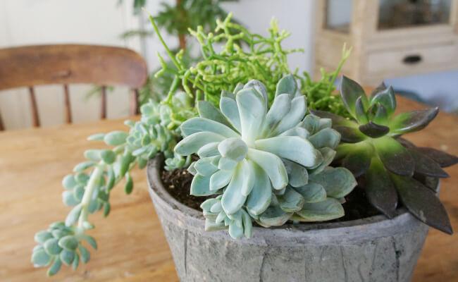 生活に植物を取り入れる