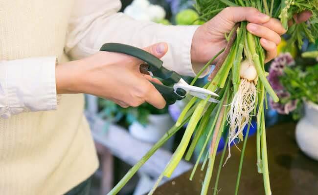 茎を切りそろえます
