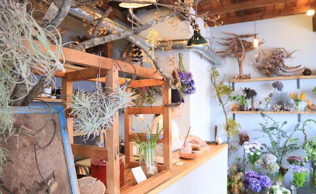 西荻窪『cotito』の店内はかわいい植物がたくさん