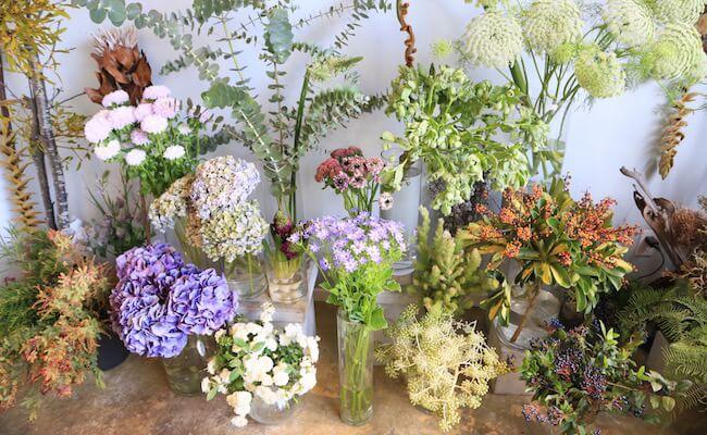 西荻窪『cotito』には花だけでなくサボテンなどの多肉植物もあります