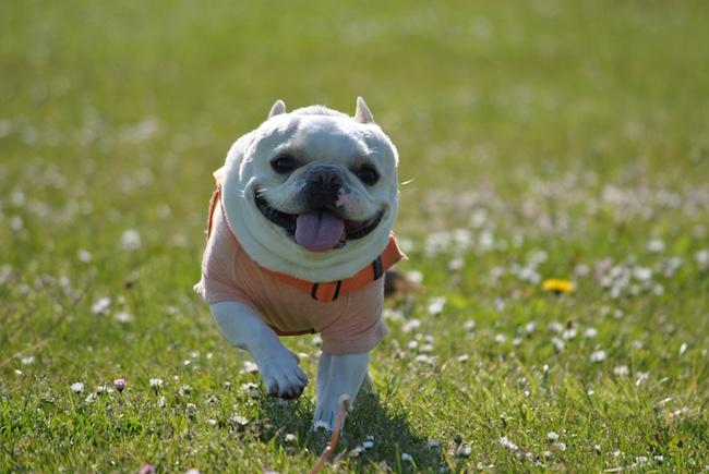 ニノが笑顔で走っている様子