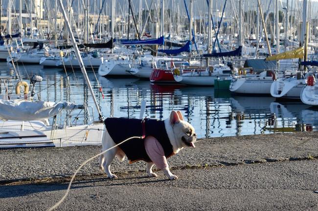 ノルマンディの港を散歩するニノ