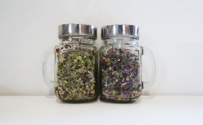 GLASS JAR SPROUTで簡単スプラウト栽培