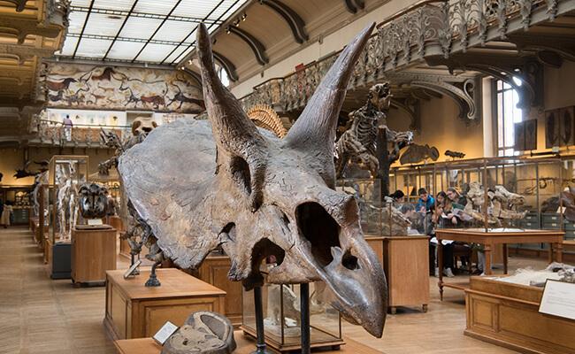 パリの博物館『GALERIE DE PALÉONTOLOGIE ET D'ANATOMIE COMPARÉE(古生物学と比較解剖学ギャラリー)』