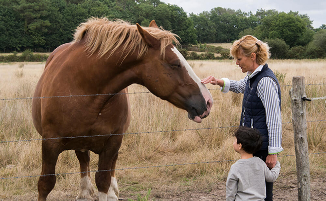 フランスの馬とのつきあい方