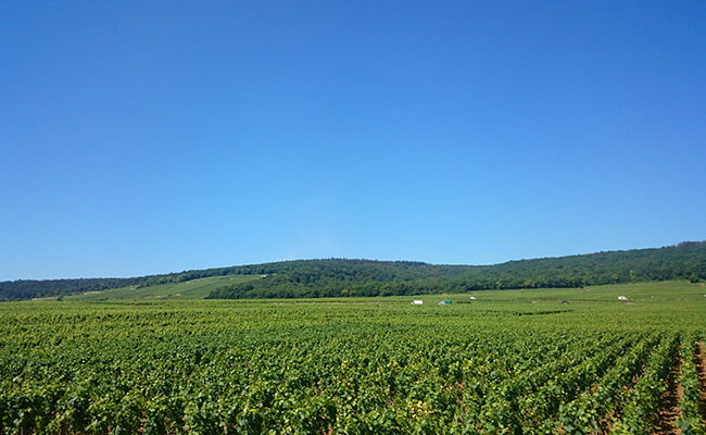 ワイン研究家・杉山明日香さんに聞く!フランスワインの楽しみ方