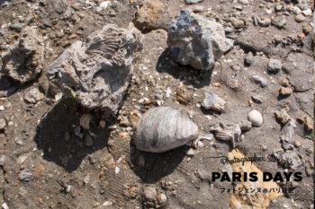 ノルマンディーの海岸にあるヴァッシュ・ノワールで化石を発見!?