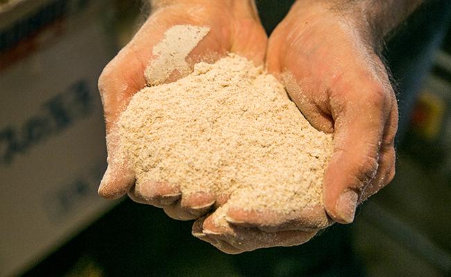 全粒粉に製粉された小麦