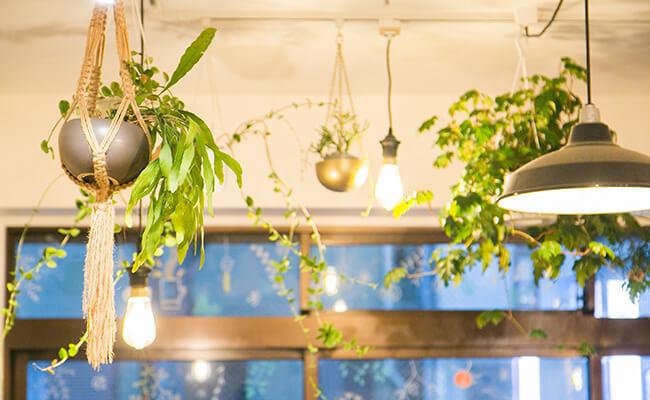 『City Coffee Setagaya(シティコーヒーセタガヤ)』の店内に飾られているグリーン