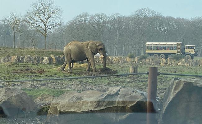 フランスの動物園はまるで人間が閉じ込められているよう?トワリー動物園へ
