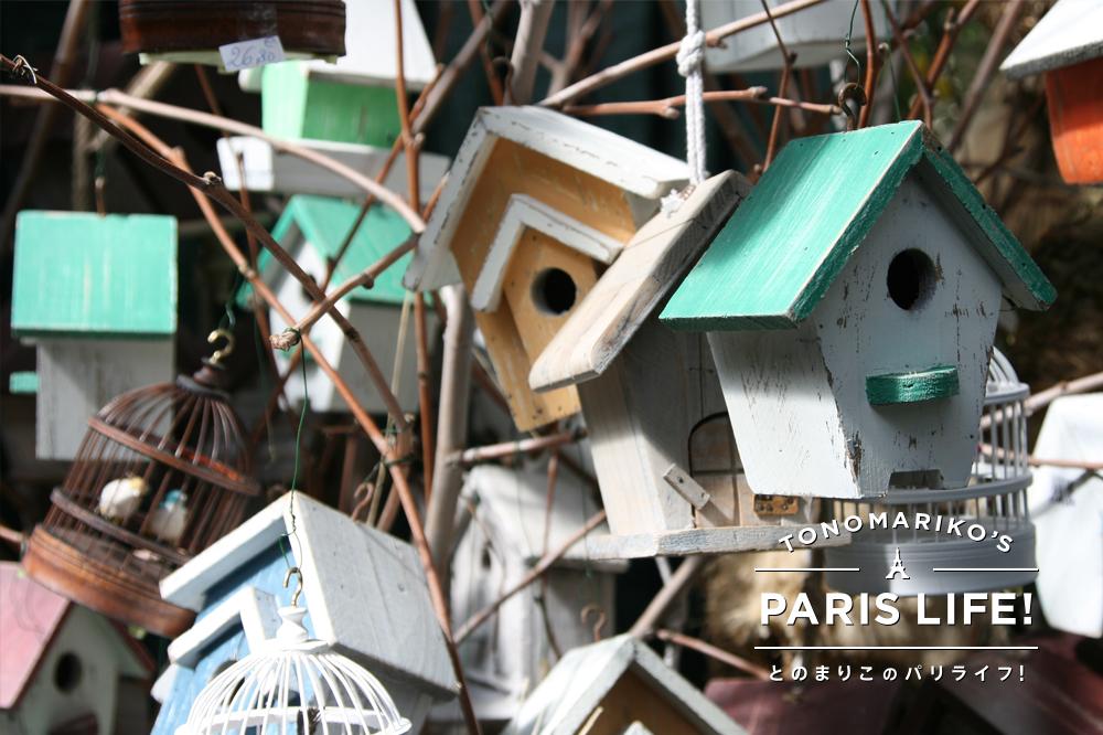 パリのシテ島には日曜日になると小鳥市が登場!