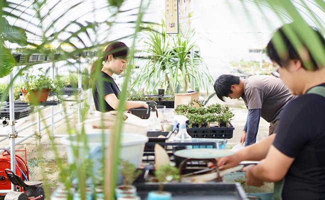 植物を育てている様子