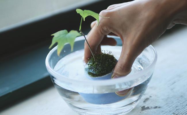 ミニ盆栽『石木花(せきぼっか)』の水やり方法