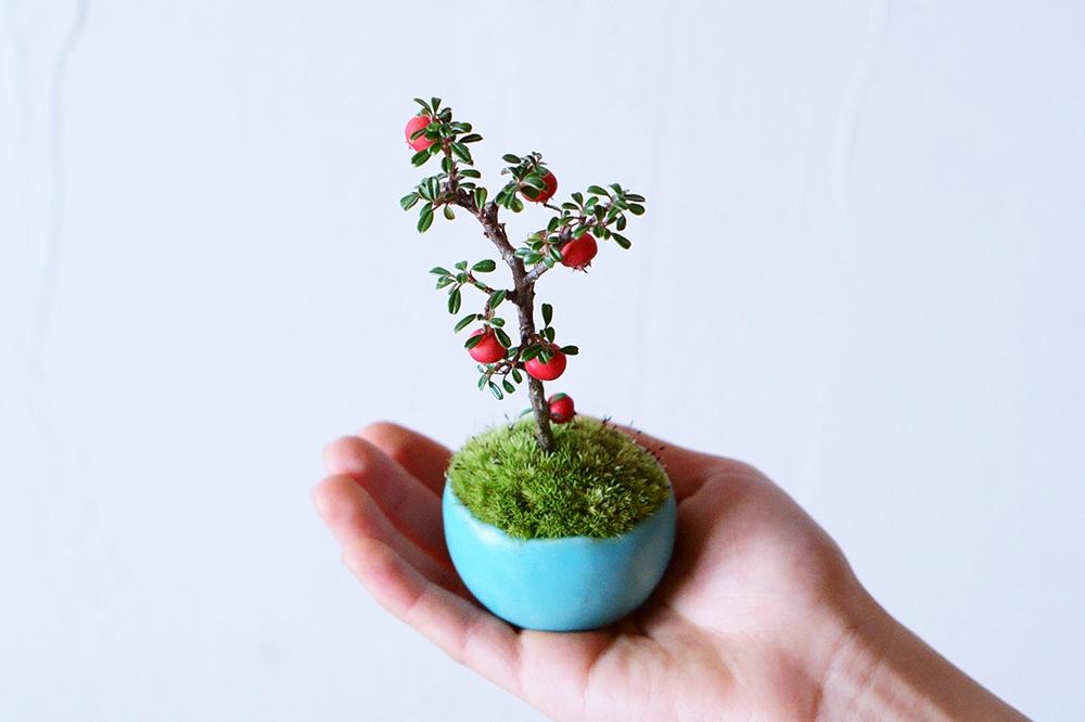 暮らしの中に自然を。盆栽をもっと身近に楽しむ『石木花』