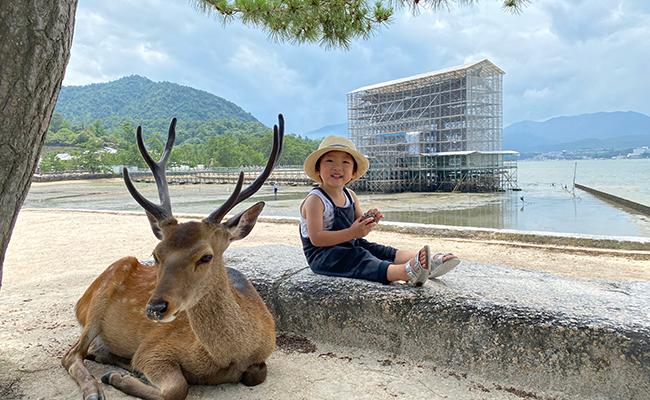 工事中の厳島神社の大鳥居、鹿と息子