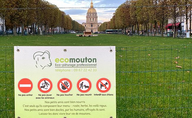 芝生のお手入れは機械でなく、羊にお任せ!「エコ・ムトン」