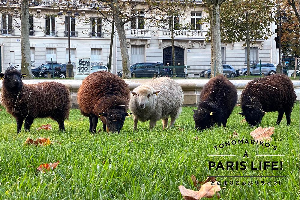ロックダウン下のフランスにささやかな癒し、芝生を食べる羊「エコ・ムトン」