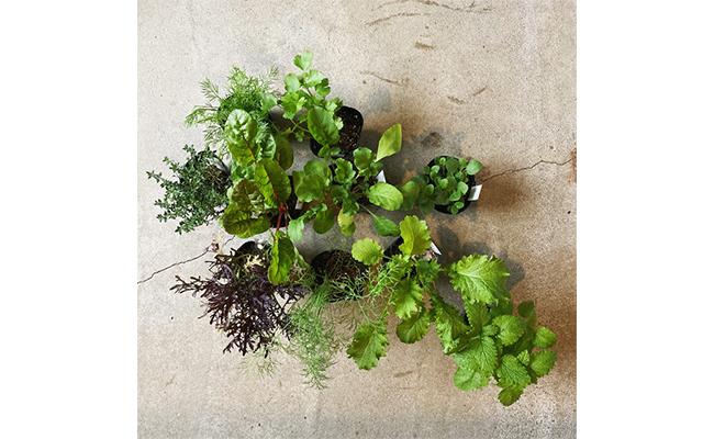 今回は、まるふく農園で人気の苗の「キッチンハーブセット」をオーダーし、育ててみることにしました。
