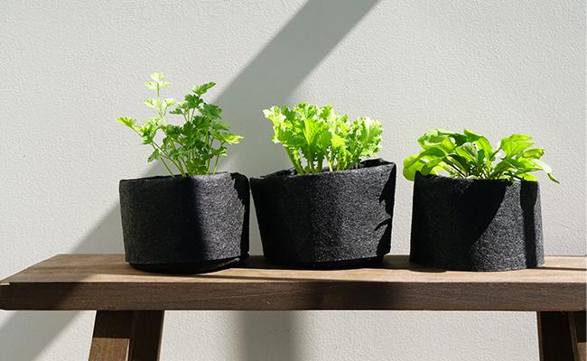 土の様子を見ながら水やりをし、ハーブの成長をチェックしている間にもふんわりといい香りが漂います。
