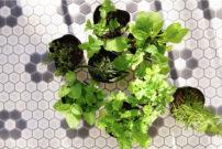 ベランダで家庭菜園!育てて、食べて楽しむハーブ作り