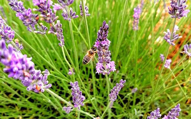 蜂が飛び交うブンブンという音