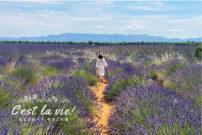 ラベンダー畑にセザンヌのアトリエ…夏のエクサンプロヴァンス